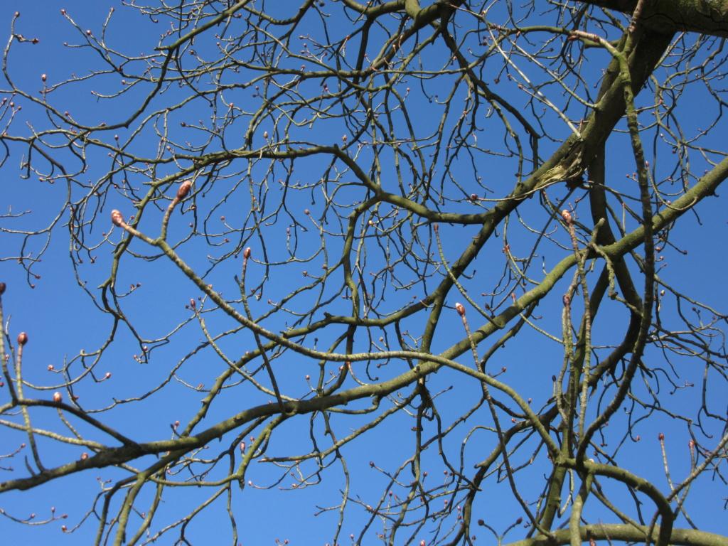 Des arbres , pour l'Arbre . - Page 3 Red_0513