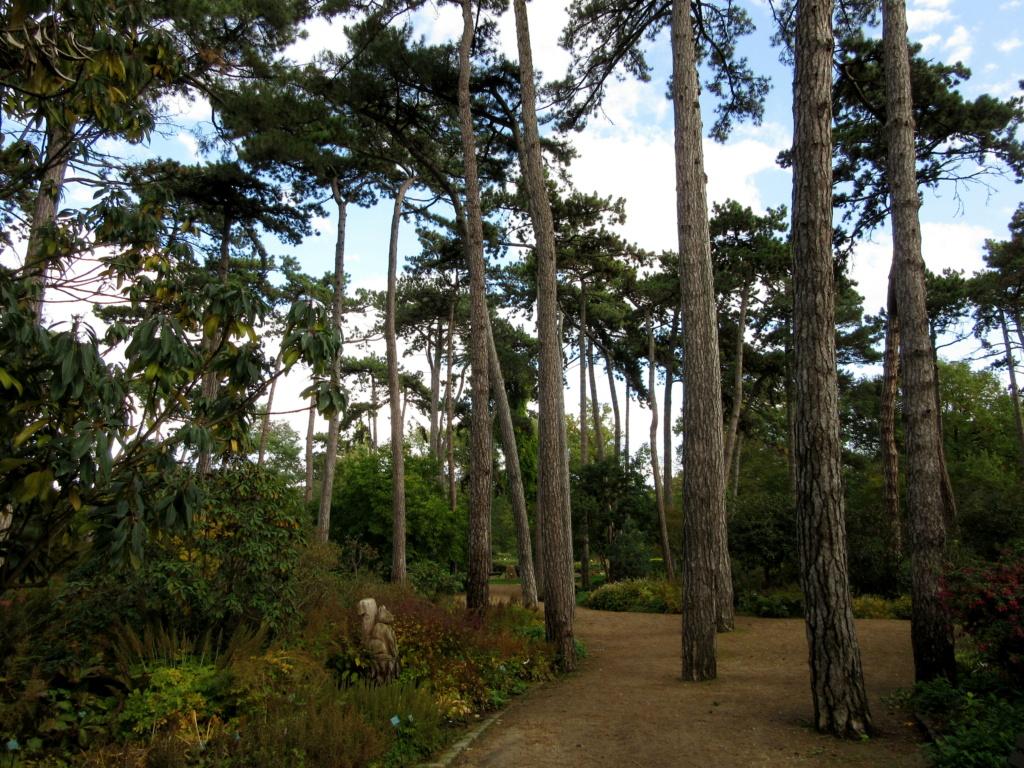 Des arbres , pour l'Arbre . - Page 3 Red_0622