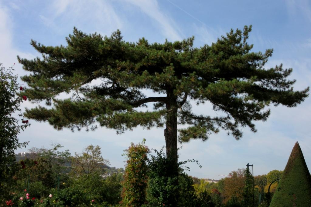 Des arbres , pour l'Arbre . - Page 3 Red_0623