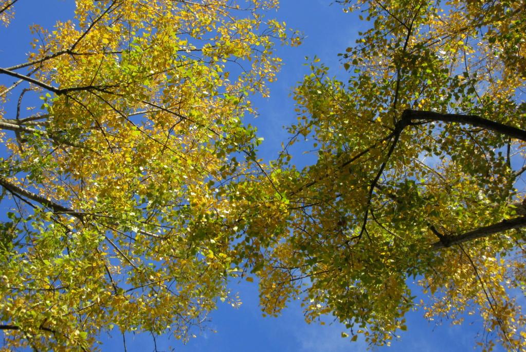 Des arbres , pour l'Arbre . - Page 3 Red_0624