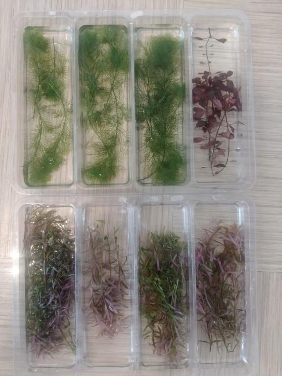 L'oasis (optiwhite 20 L planté) 20200510