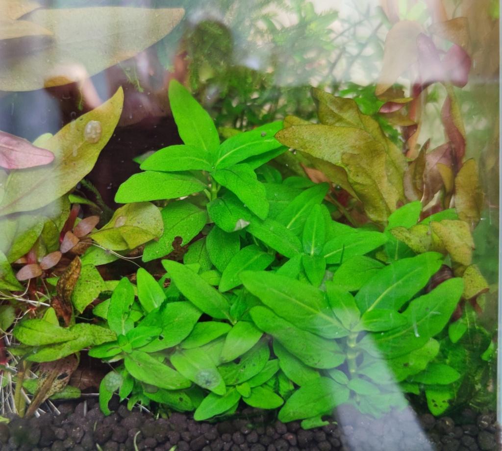 Nouveau bac envahi par les algues Img_2028