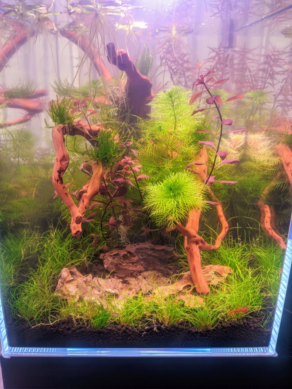 L'oasis (optiwhite 20 L planté) - Page 2 Nex_2025