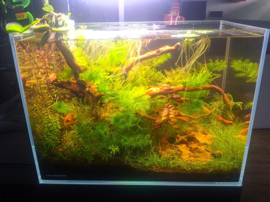 L'oasis (optiwhite 20 L planté) - Page 3 Nex_2029