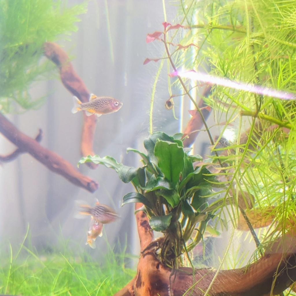 L'oasis (optiwhite 20 L planté) - Page 3 Nex_2032