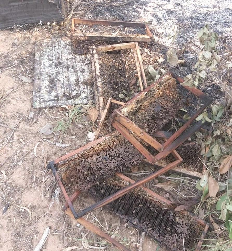 Incêndio mata mais de 1,7 milhão de abelhas em Casa Branca Caixas10