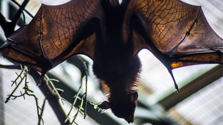 CCZ alerta sobre casos de raiva em morcegos em áreas urbanas Morceg10