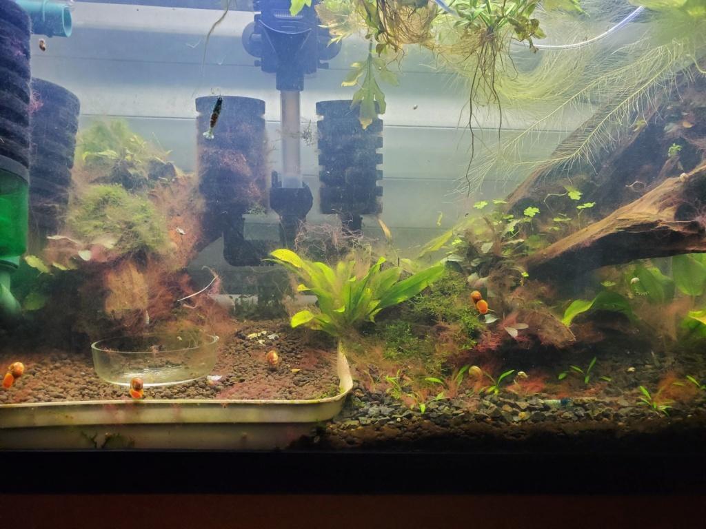 Vidéo algues AQUA 20191027
