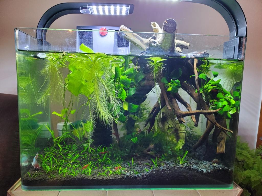 [PROJET] Changement d'aquarium en un week-end 20191118