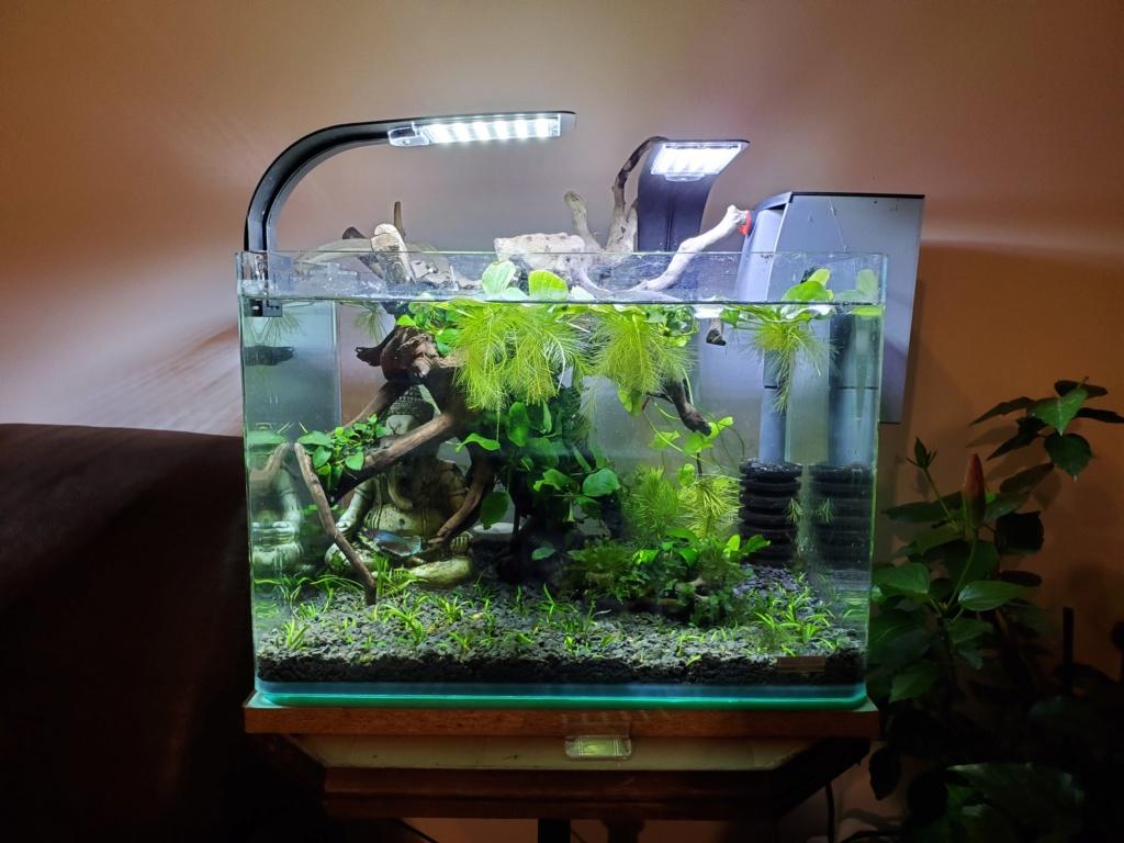 [PROJET] Changement d'aquarium en un week-end 20191121