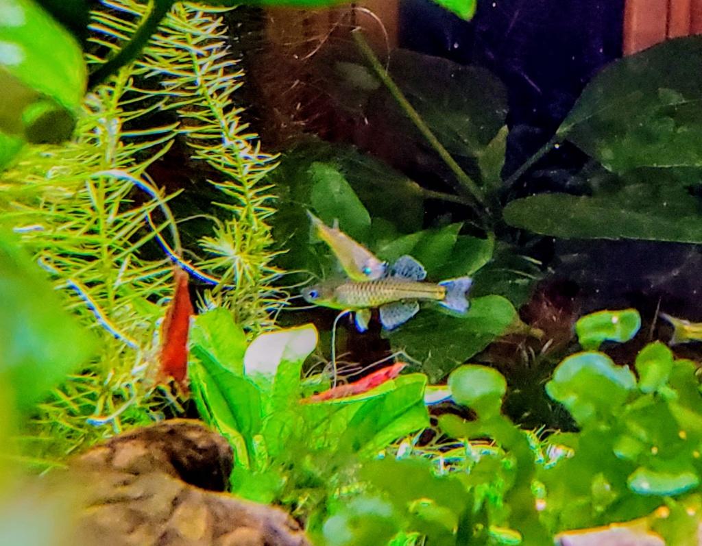 [PROJET] Changement d'aquarium en un week-end 20191219