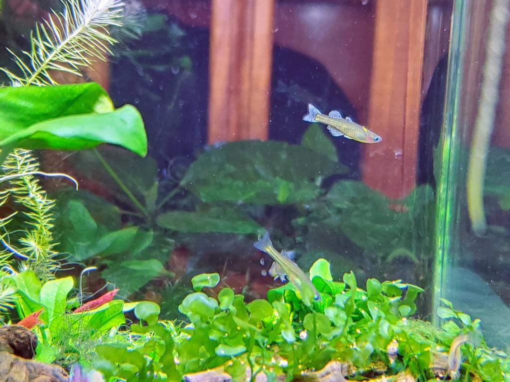 [PROJET] Changement d'aquarium en un week-end 20191222