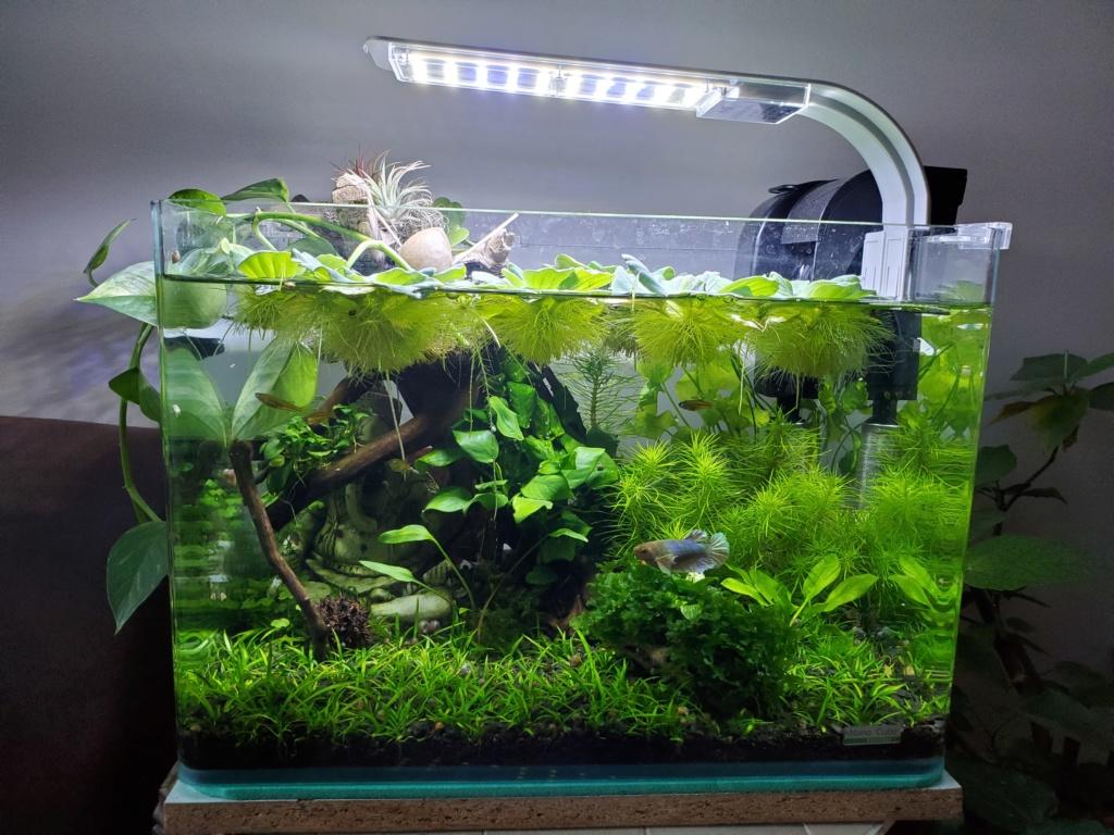 [PROJET] Changement d'aquarium en un week-end 20200222