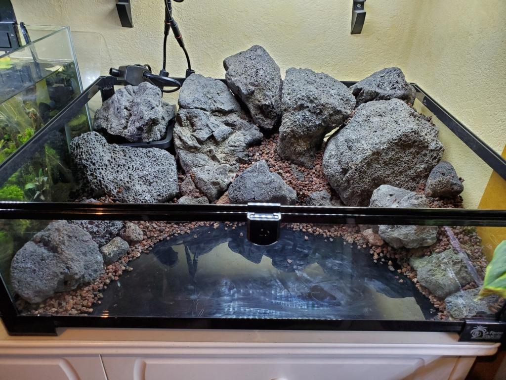 [PROJET] Un aquarium dans un terrarium 20200832