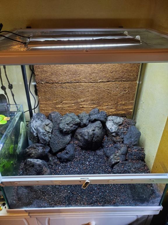 Plantes pour Aqua spécial crevettes 20200920