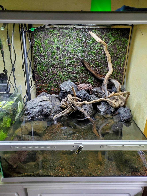 [PROJET] Un aquarium dans un terrarium 20201010