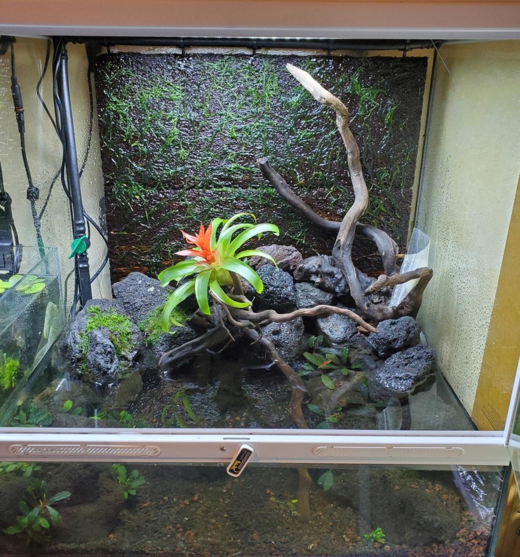 [PROJET] Un aquarium dans un terrarium 20201012