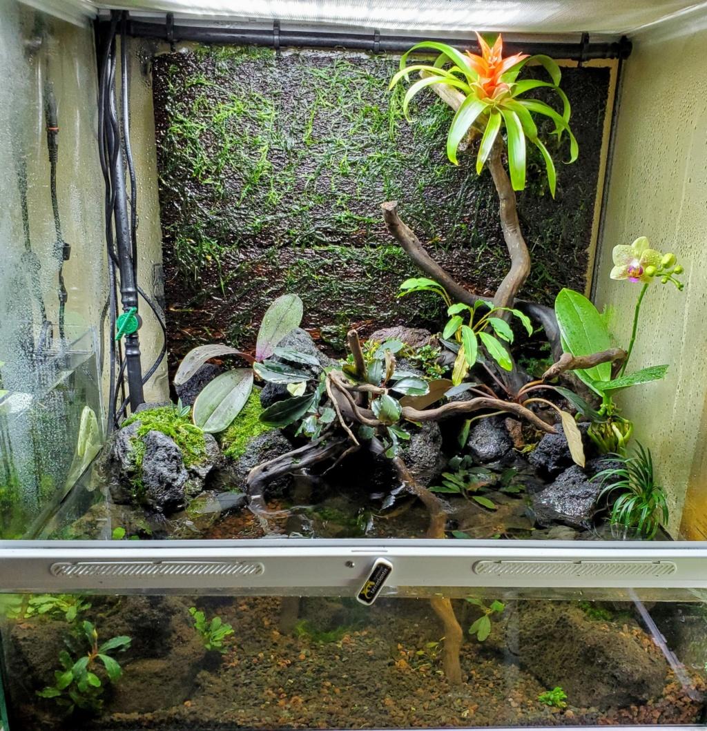 [PROJET] Un aquarium dans un terrarium 20201013