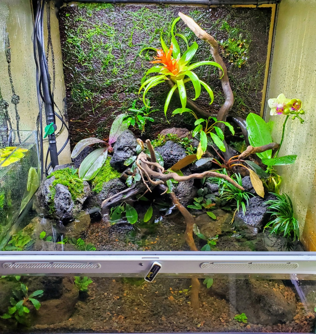 [PROJET] Un aquarium dans un terrarium 20201014