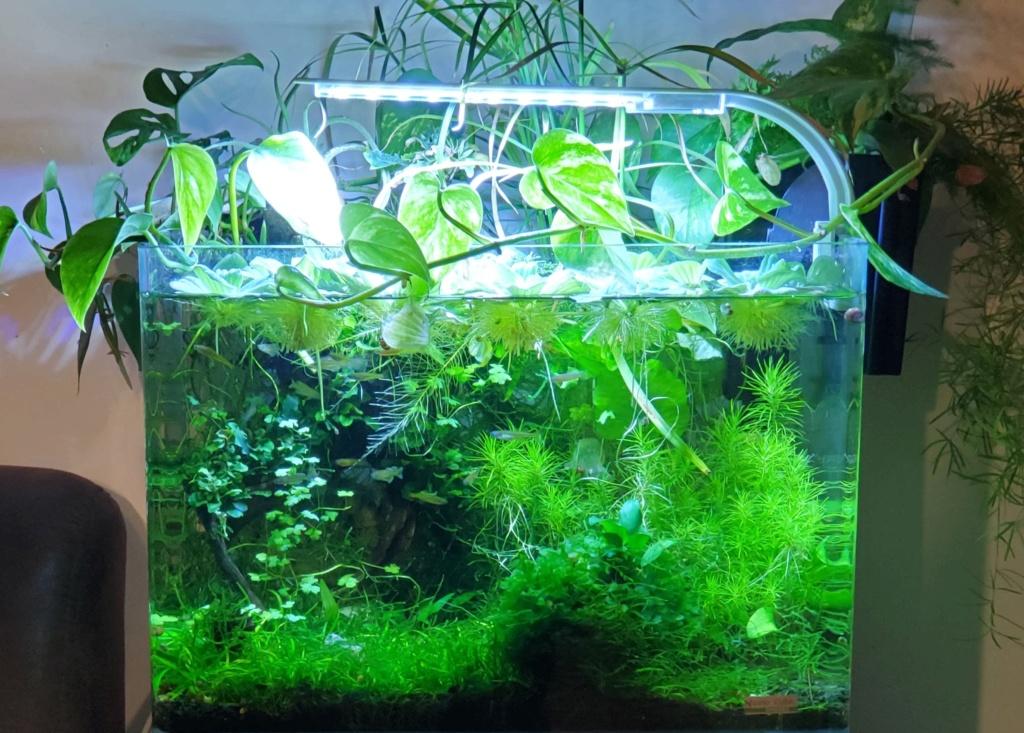 Plantes et sol 100% pouzzolane 20201018