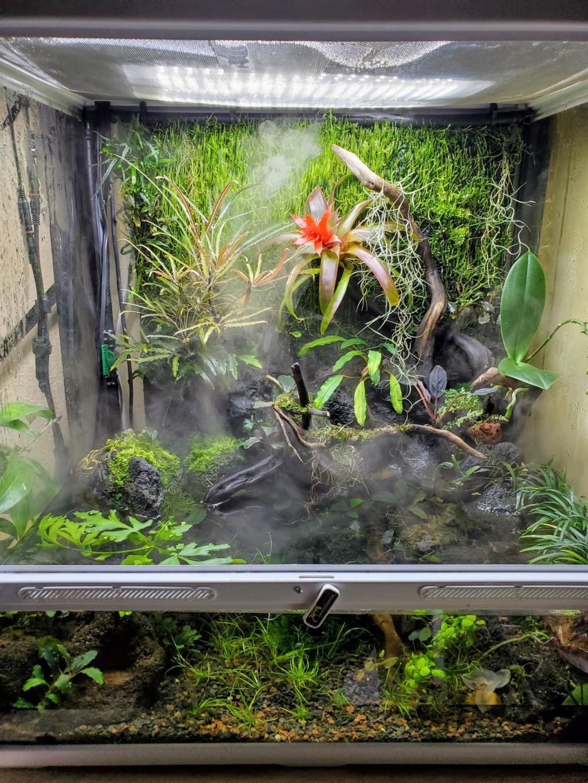 [PROJET] Un aquarium dans un terrarium 20201125
