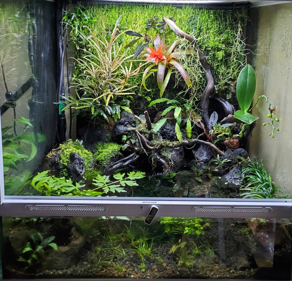 [PROJET] Un aquarium dans un terrarium 20201128