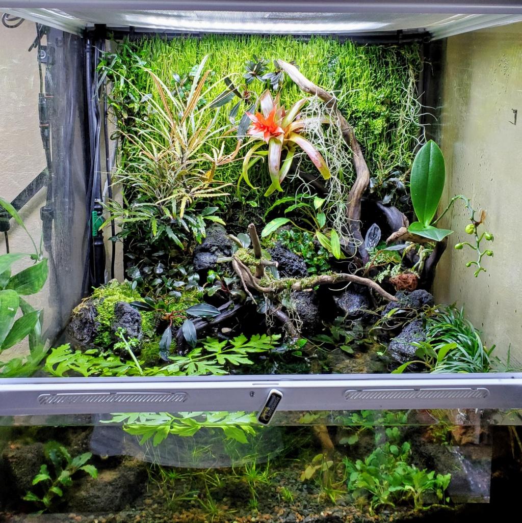 [PROJET] Un aquarium dans un terrarium - Page 2 20201129