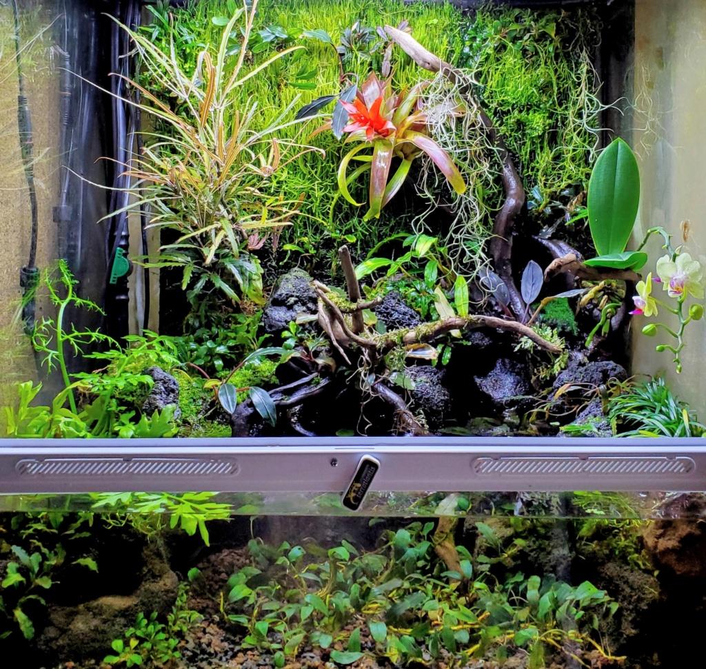 [PROJET] Un aquarium dans un terrarium - Page 2 20201215
