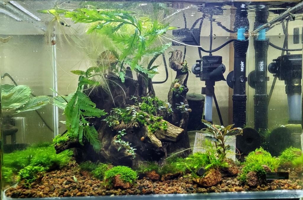 Plantes pour Aqua spécial crevettes 20201233