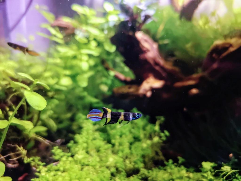 Recueil de photo aquariophiles de qualités Img_2032