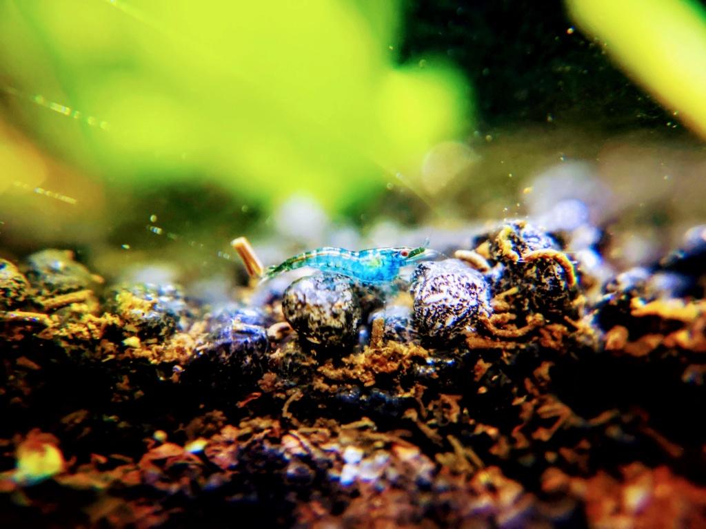 Recueil de photo aquariophiles de qualités Img_2033