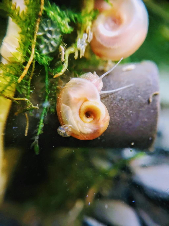 Recueil de photo aquariophiles de qualités Img_2035