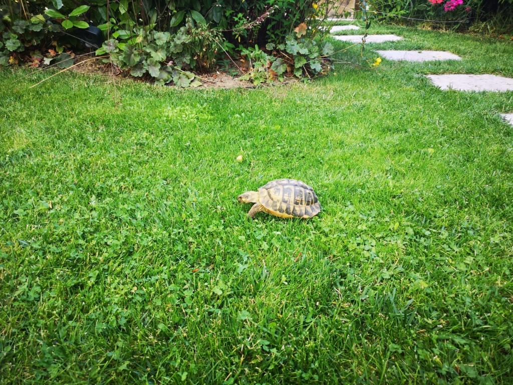 Les animaux de nos jardins - Page 4 Img_2043