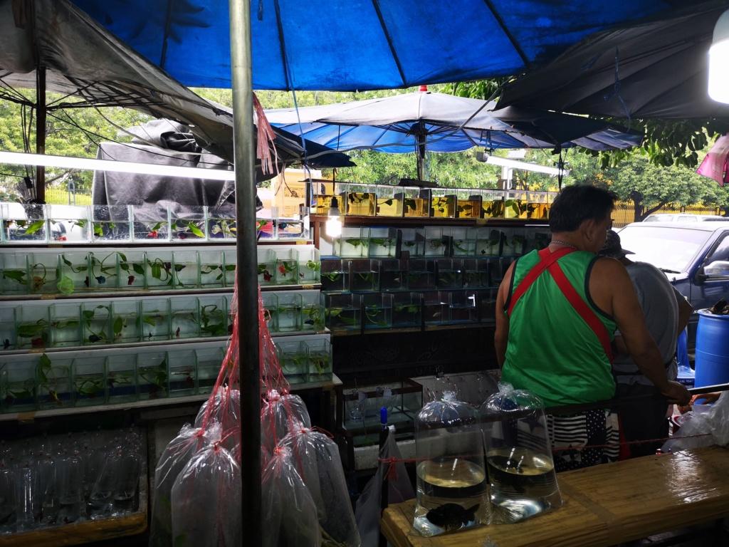 Le marché de Chatuchak : Predatorland Img_2090