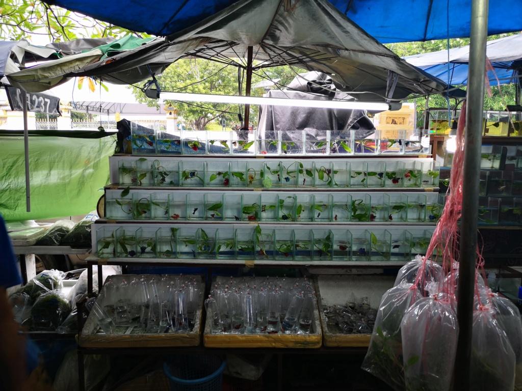 Le marché de Chatuchak : Predatorland Img_2099