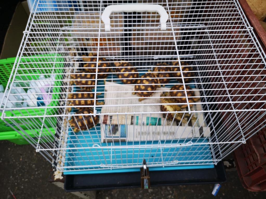 Le marché de Chatuchak : Predatorland Img_2128