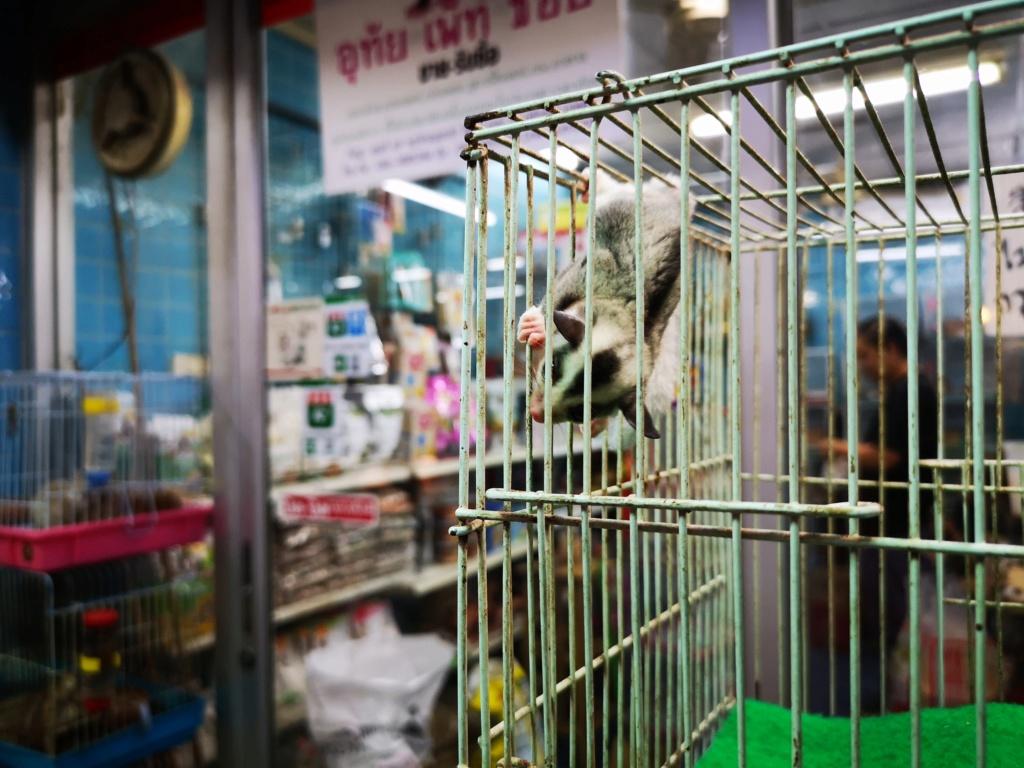 Le marché de Chatuchak : Predatorland Img_2136
