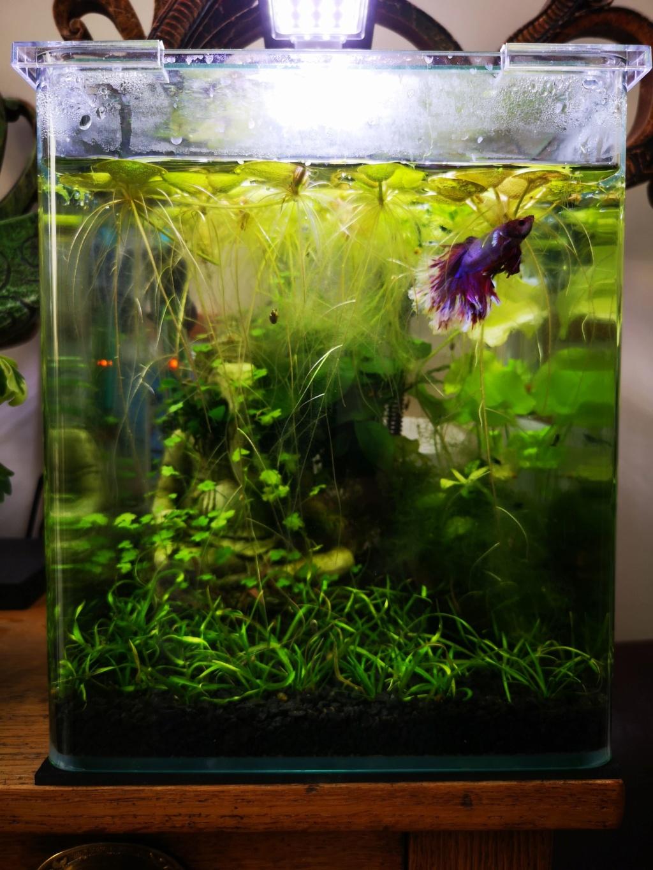 [PROJET] Changement d'aquarium en un week-end Img_2151