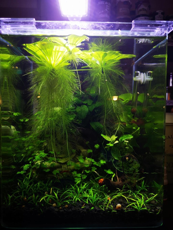 [PROJET] Changement d'aquarium en un week-end Img_2152
