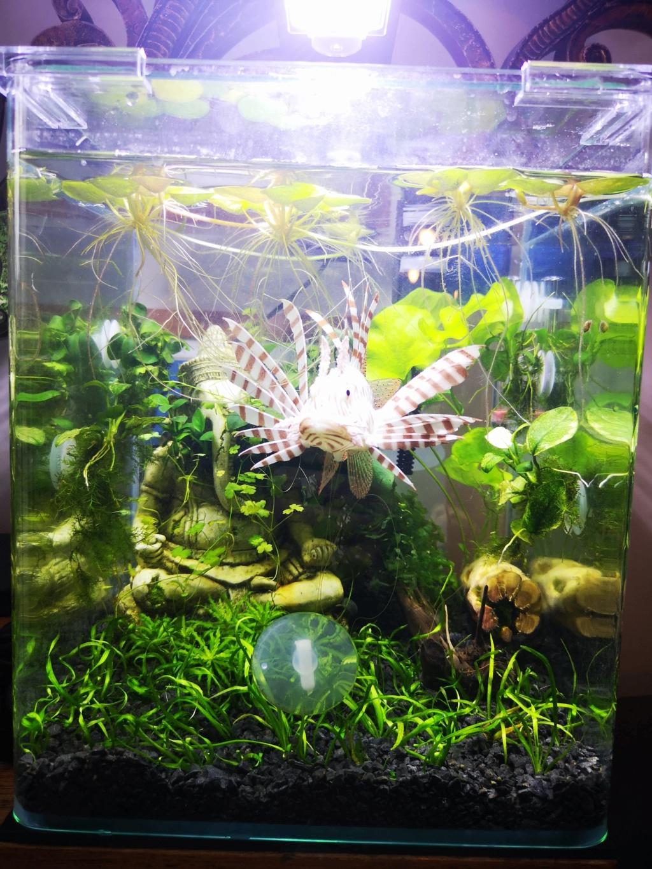 [PROJET] Changement d'aquarium en un week-end Img_2153