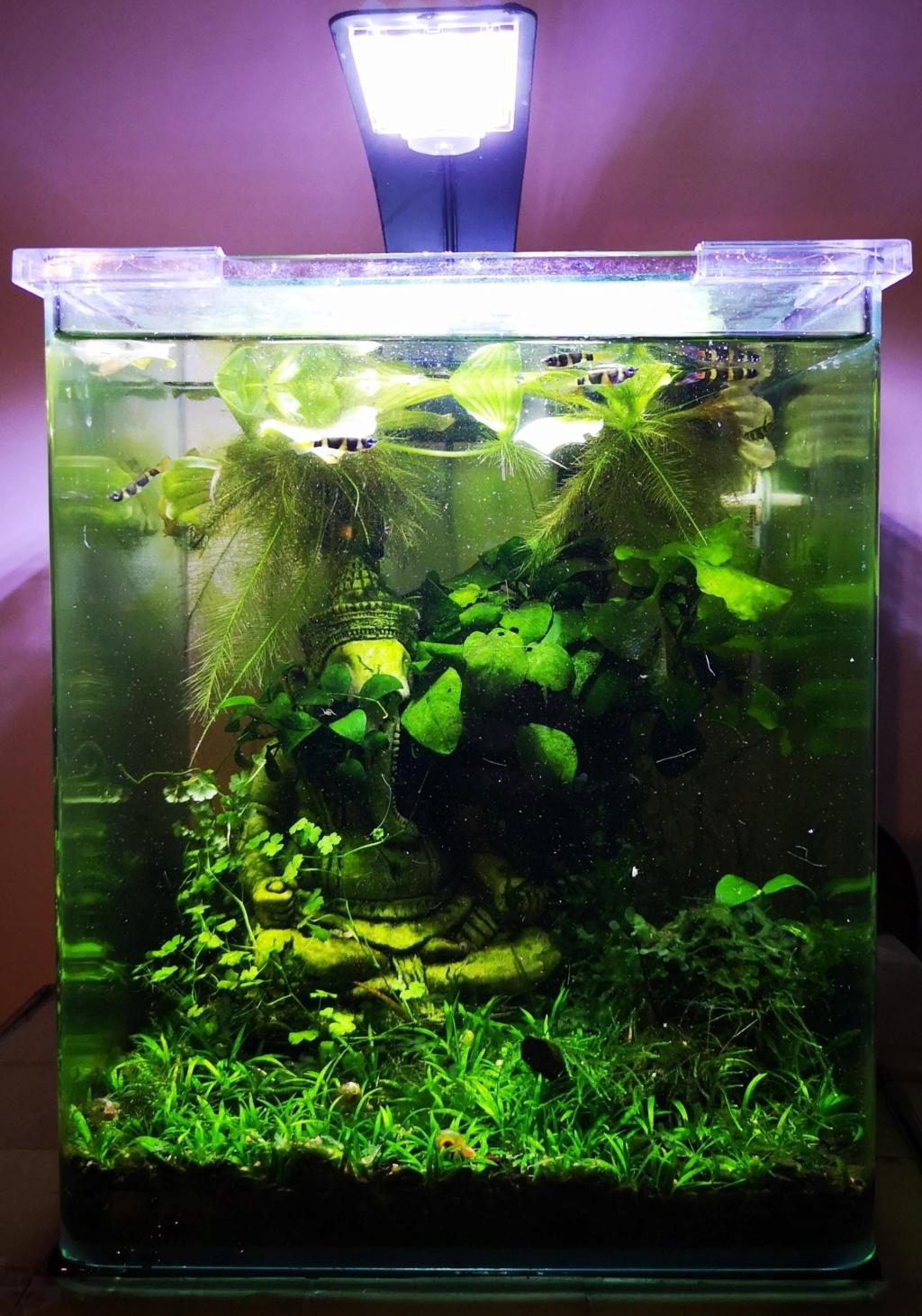 [PROJET] Changement d'aquarium en un week-end Img_2154