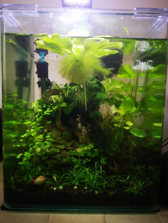 [PROJET] Changement d'aquarium en un week-end Img_2155