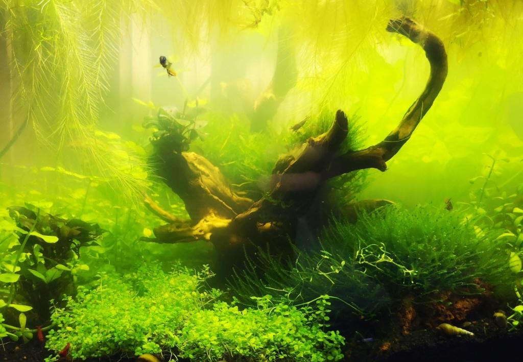 Vidéo algues AQUA Img_2165