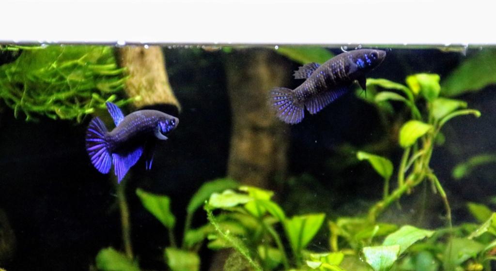 [PROJET] Un aquarium dans un terrarium - Page 2 Img_6613