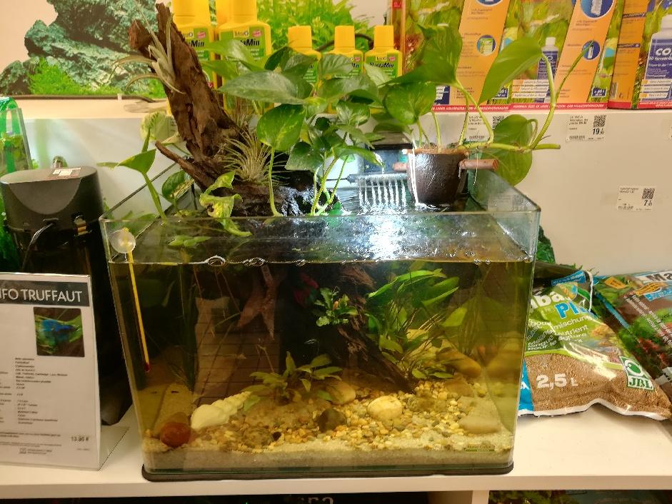 [PROJET] Changement d'aquarium en un week-end Part_110