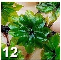 [TEST] Les graines Wish et Amazon - Page 4 Plante10
