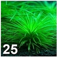 [TEST] Les graines Wish et Amazon - Page 4 Plante11