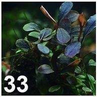 [TEST] Les graines Wish et Amazon - Page 4 Plante12