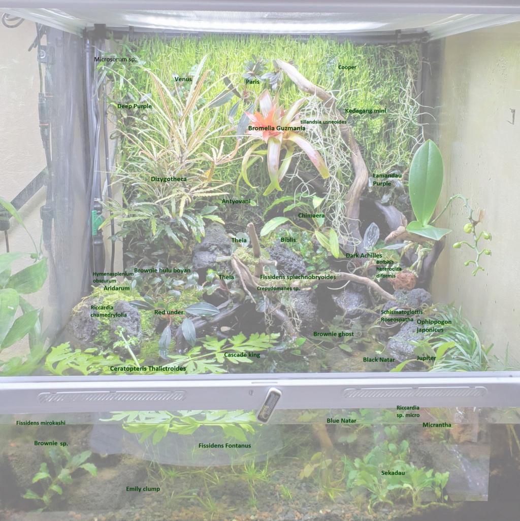 [PROJET] Un aquarium dans un terrarium - Page 2 Plante14