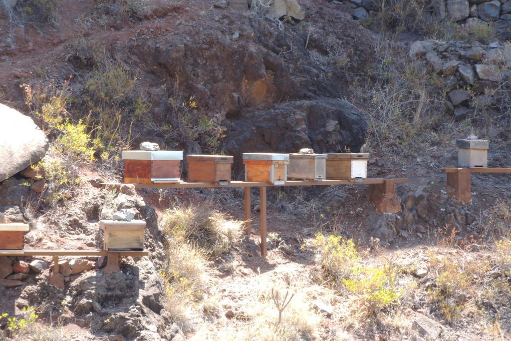 Abeille noire de la Gomera (iles Canaries) Dscn9910